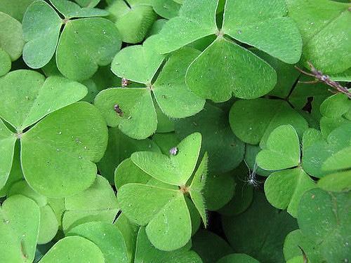 Flender – Kurz und Knackig – Wie einfach ist das den bei den Iren….